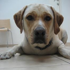 כלב במרפאה ווטרינרית
