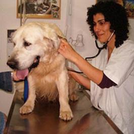 """ד""""ר ענת אהרונוביץ מטפלת בכלב במרפאה וטרינרית"""